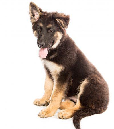 dog-1304448_1920