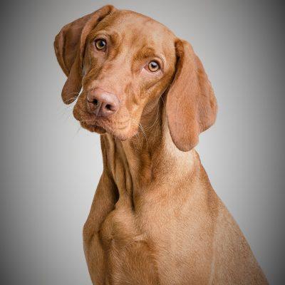 dog-3277414_1920